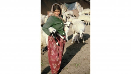 Yörük woman carrying lambs